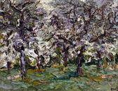 005 | Blühende Kirschbäume im Regen